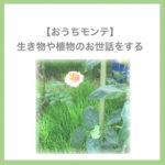 【おうちモンテ】生き物や植物のお世話をする